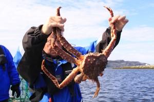norwegen_krabbe