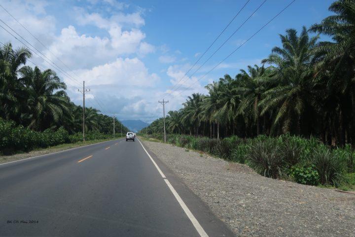 Fahrt durch Palmenhaine