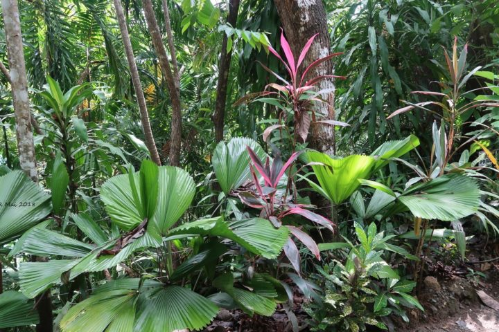 Erster Spaziergang im Regenwald