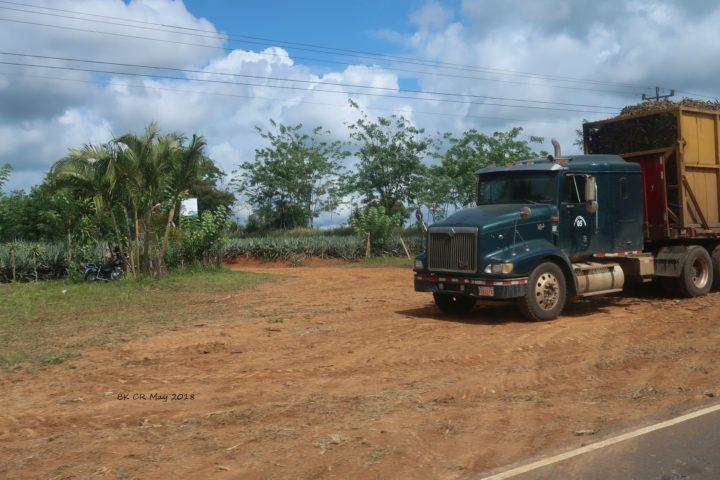 Laster transportiert Zuckerrohr; im Hintergrund Ananasfeld
