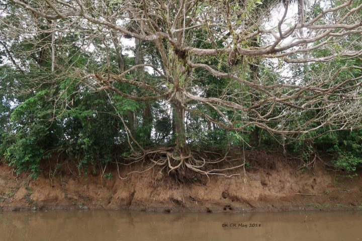 Baum am Rande des Abgrundes