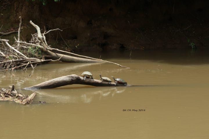 Auch Schildkröten lieben das Sonnenbad