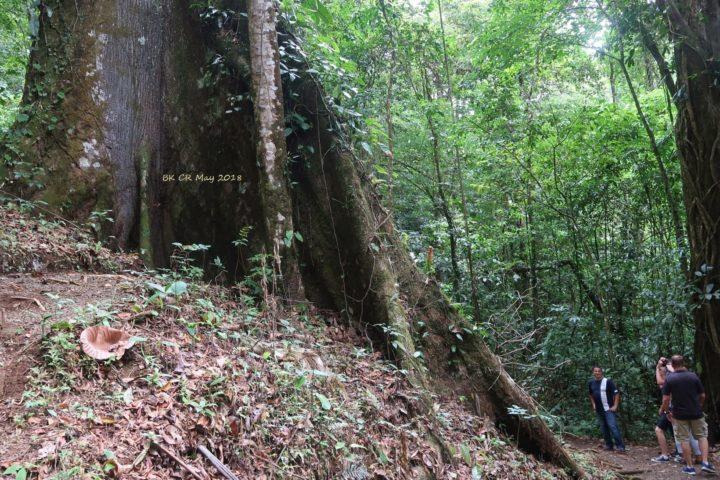 Beim Mammutbaum angekommen