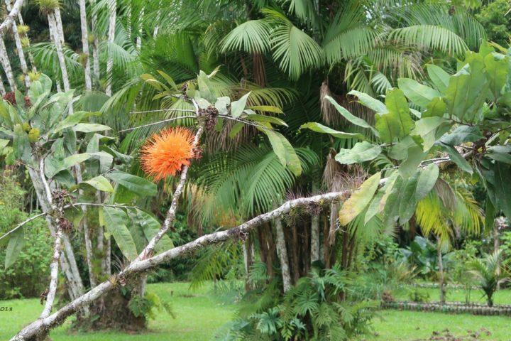 Im Parque Botanical CATIE
