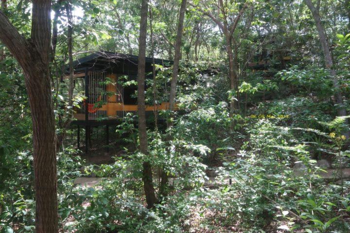 Bungalows im Wald verteilt