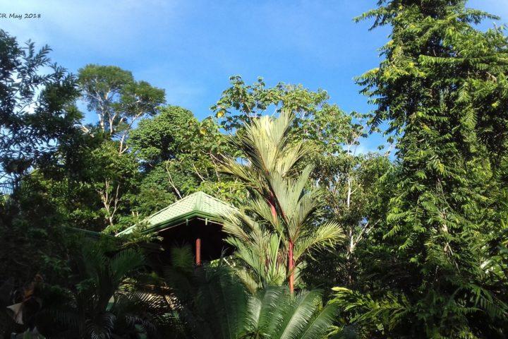 Blätterdach und blauer Himmel