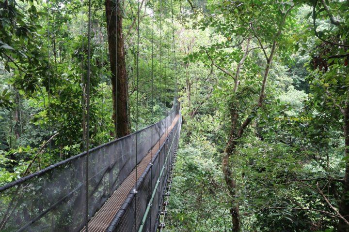 Hängebrücke ins Paradies