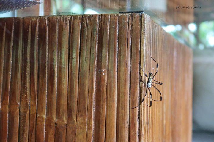 Eine Spinne am Zmorgetisch :-)