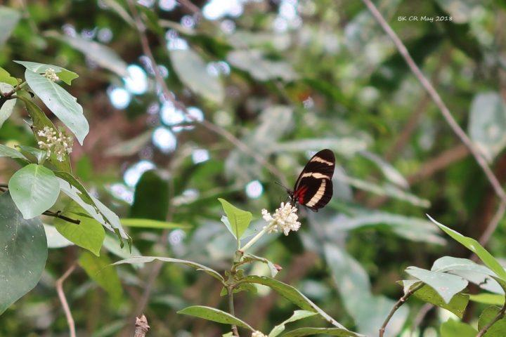 Ein Schmetterling beim Apéro