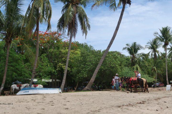 Strand und hoch zu Pferd: perfekt