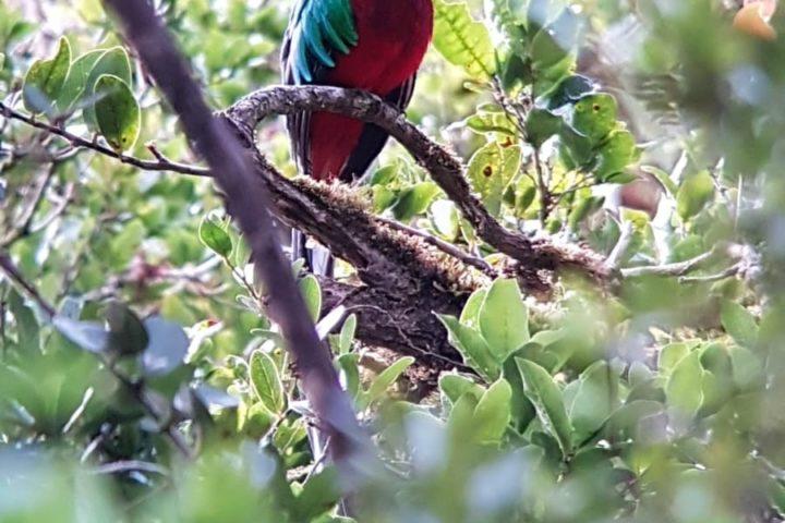 Quetzal - mit scooping geschossen