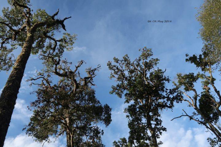 Bäume bis in den Himmel