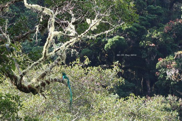 und mittendrin ein Quetzal