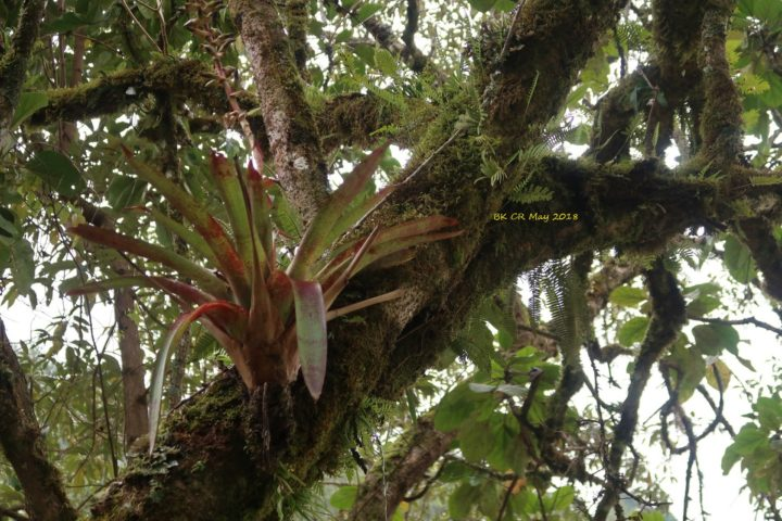 Aufsitzerpflanzen auf Bäumen: Orchideen, Bromelien und mehr