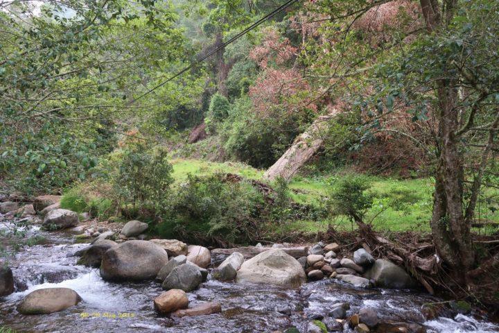 Der Savegre-Fluss