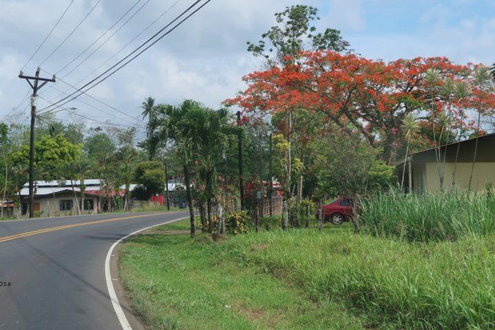 Roter Baum: Flamboyant