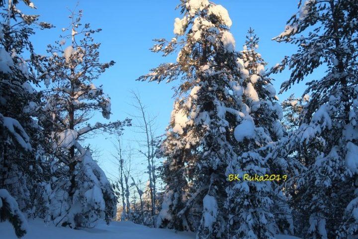 ruka winterlandschaft tannen